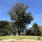 公営初の樹木葬墓地=横浜市